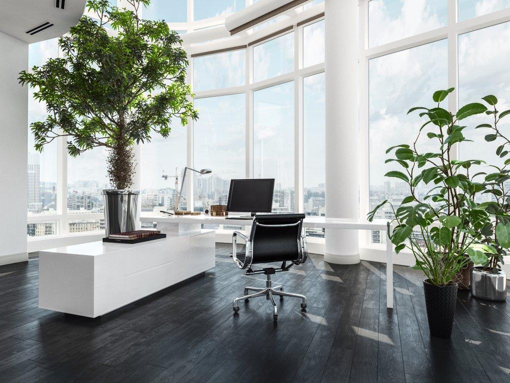 Pianta Da Ufficio Poca Luce le 5 piante da ufficio più resistenti | queste sono le più
